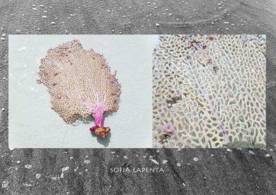 Colección Marina SS015 16